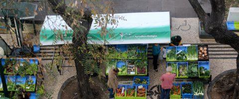 1_organic_market_Funchal