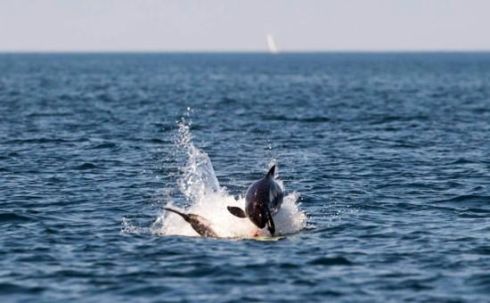 porpoise kullaberg nature reserve