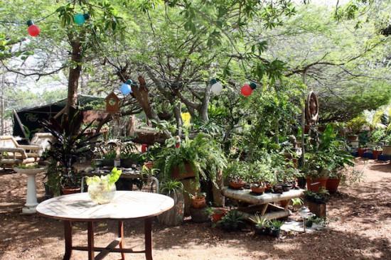 botanical garden bonaire
