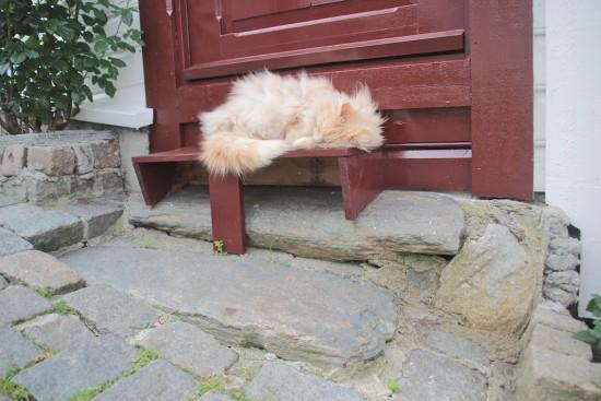 Gamle Stavanger cat