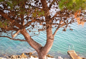 Pure! Kvarner: Opatija and the islands of Cres, Losinj and Krk