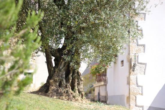 ipsa olive oil