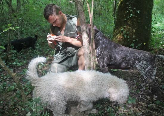 karlic tartufi truffle hunting