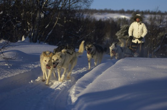 Dog sledding Roros husky safari Norway