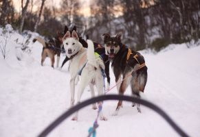 Husky adventure and winter wonderland in Røros