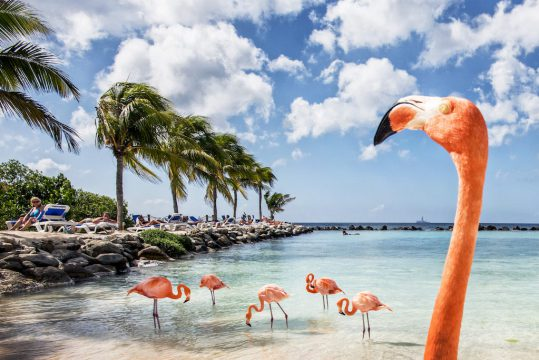 Flamingos Aruba Renaissance Hotel flamingo beach