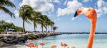 Coming soon: Pure! Aruba