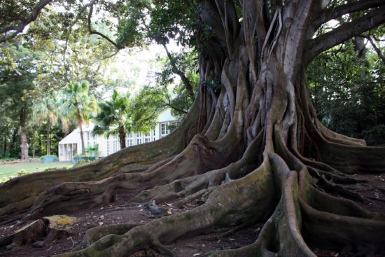 Azores botanical garden