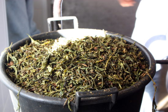 Organic tea Gorreana Azores food travel Azores restaurants tips