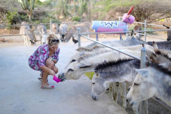 donkey sanctuary Aruba jeannette van mullem purefoodtravel things to do in Aruba