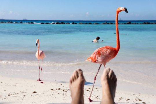 Flamingos Renaissance Island Aruba purefoodtravel things to do in Aruba